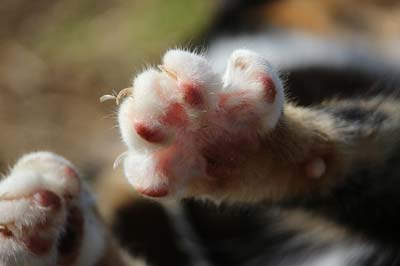 Little kitten paws shown from the underside.